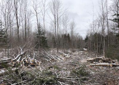Maine Woodlot Management